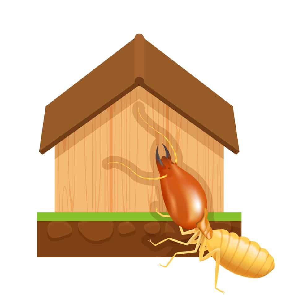 Termite and a Wooden House