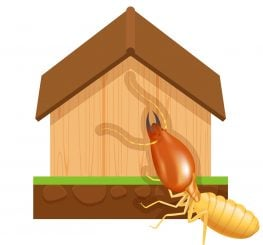 termite and wood house isolated on white background, icon insect species termite ant eaten wood home decay, symbol damaged wooden house form termite eaten, cartoon termite clip art and home